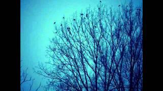 Le courage des oiseaux (Dominique A cover)