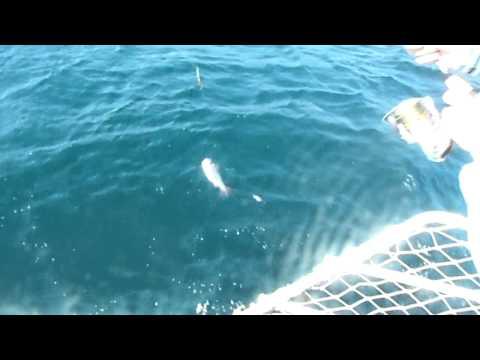 Bodrum Güvercinlik Balık ve Gezi Turları Mustafa Kaptan 0 532 160 78 56