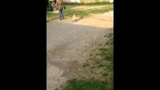 Rudi vs rudi (Official Video)
