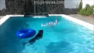Perro salva a su dueño en una piscina