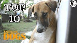 Top 10 INDIAN DOG BREED   Hindi   TOP 10 LIST   HINGLISH FACTS