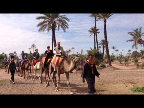 Camel Ride Marrakech