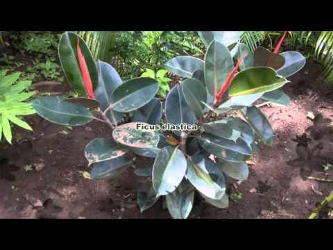 La flore du Nicaragua
