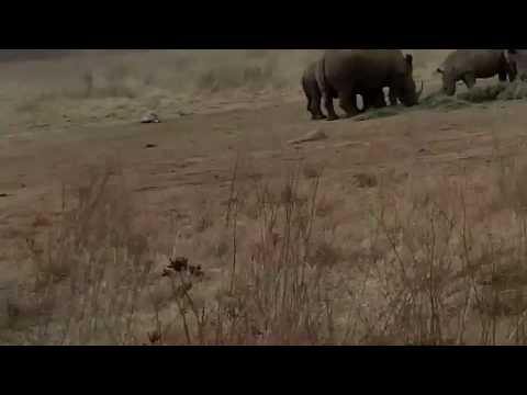 KIA Experience – Rhinos & Lions Park – South Africa