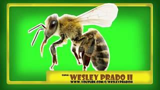 som de zumbido de abelha - Bee buzz sound