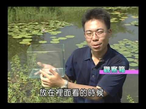 國小_自然_調查水域環境【翰林出版_四上_第二單元 水生生物的世界】 - YouTube