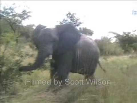 HILARIOUS SNEEZING ELEPHANT!!!