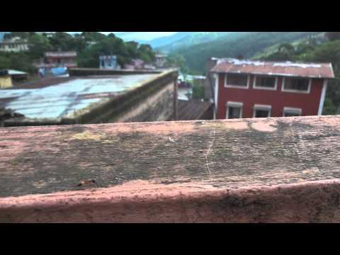 Ant in Terrace, Tansen City Nepal – Part 2