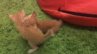 【魚乾】新貓貓成員:3) 歡迎OLA、OLI加入!