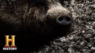 Mountain Men: Hunting a Wild Hog | History