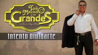 Toño Macedo - Intento Olvidarte (Audio Oficial)