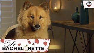 Rachel's Best Friend Copper - The Bachelorette 13x2