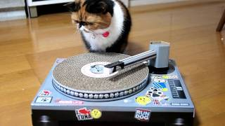 DJ Meme ♪ Cat Scratch Turntable