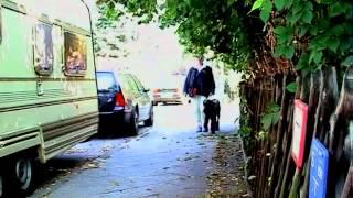 Der Blindenführhund bei der Arbeit - der sehende Partner