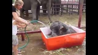 Simpático elefante bebé conquista la web 18/03/2015