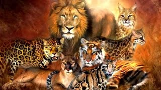 All Feline Species - Species List