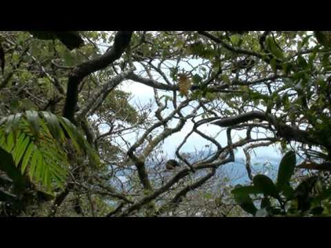 monkeys on mombacho – nicaragua