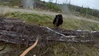 Black Bear Attacks Man