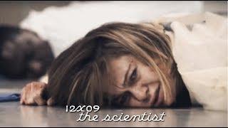 grey's antomy | 12x09 | the scientist