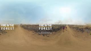 Fire in the Forest | Trailer