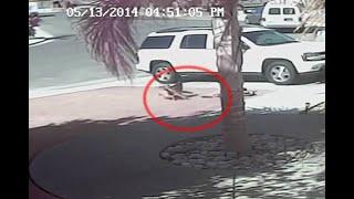 Gato salva a niño del ataque de un perro