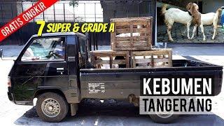 Pengiriman 7 Kambing Etawa Super & Grade A Tujuan Kebumen & Tangerang 5 Maret 2019