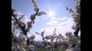 Vin Floriile cu soare