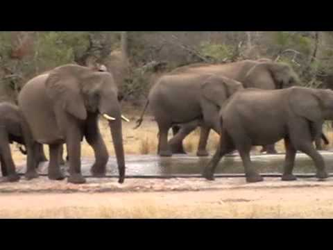 Kruger Park video safari (3) – South Africa (2011) baboons playing