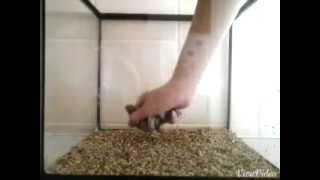 Goldfish aquarium set-up + feeding tips