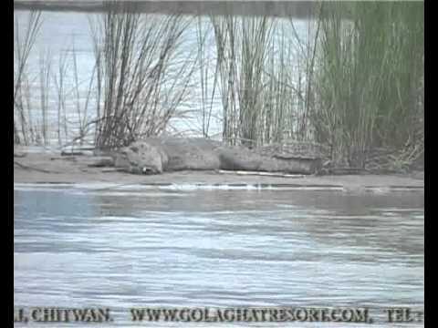 Golaghat Wildlife Resort,Chitwan Nepal.asf