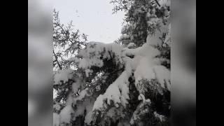 Bir Sabah Gelecek Kardan Aydınlık