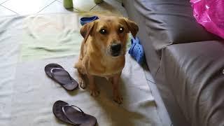 Il mio cane è JOHN CENA!!!