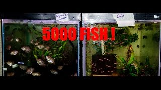 HUGE fish order! Chaos in the fish room!