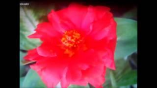 Flor Sin Jardin Con Sergio Alcaraz