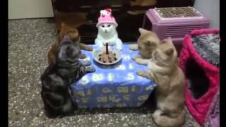 cats celebrates birthday - Very Funny