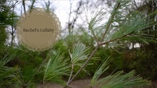 rachel's lullaby//dandelion hands