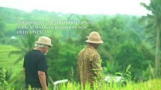 Episode 1: Iwan Fals turun ke sawah Jatiluwih, Bali.