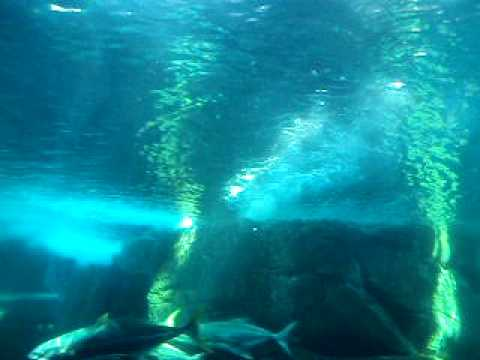 Sand Tiger Sharks – Two Oceans Aquarium