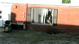 Untamed and Uncut - Deer Jumps Through Glass