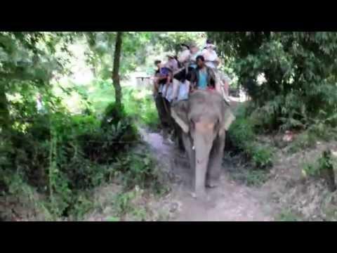 Elephant Ride Chitwan National Park – Nepal