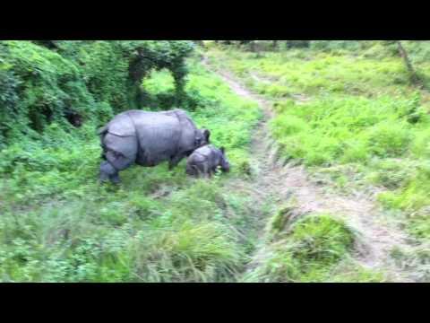 Rhino in Chitwang Nepal