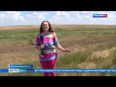 В Оренбургской области начались ранние сенокосы
