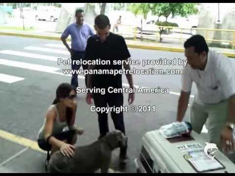 Nalu the dog arriving in Managua, Nicaragua