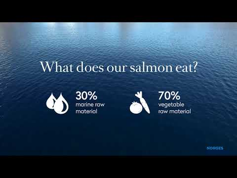 Salmon from Norway - How it's made