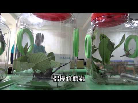 2013.04.12上智國小-教學活動記錄-認識竹節蟲 - YouTube