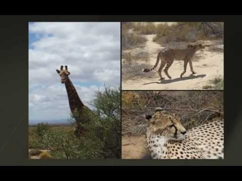 zuid afrika schwarzkopf 2011-Groot.mp4
