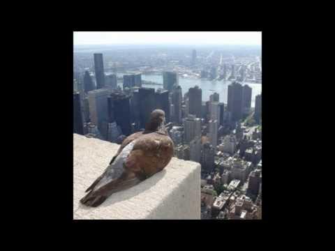 jean-leloup-pigeon-thomas-karadanis