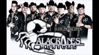 Zapateado Encabronado ( Alacranes Musical ) Pa´ Zapatear Duro
