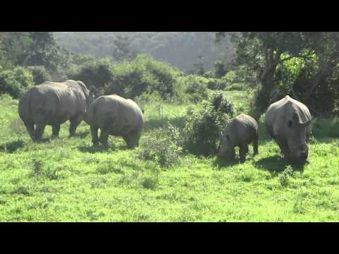 Sibuya game reserve South Africa game drive safari Rhino
