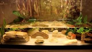 How to Setup a Fire Belly Newt Tank (Simple Method) width=